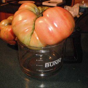 2-5-clementz-tomato