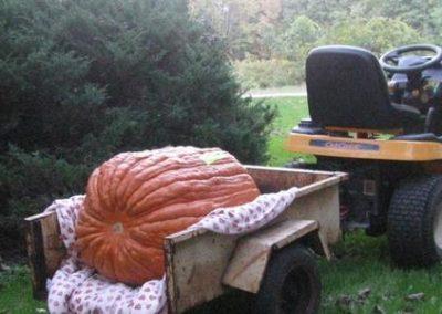 161 lb Field Pumpkin