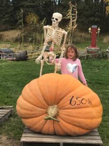 650 lb Pumpkin