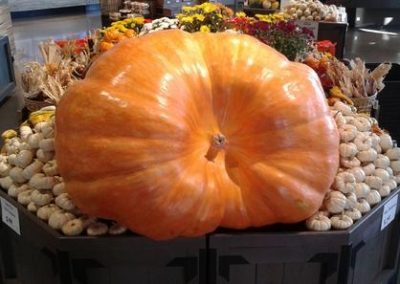 580 lb Pumpkin
