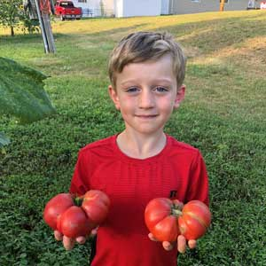 Jacks home grown tomatoes